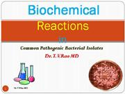 Biochemical Reaction in Bacteriology