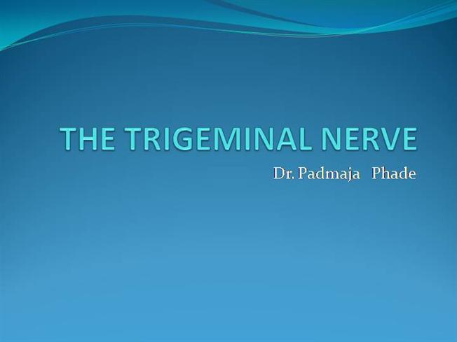The Trigeminal Nerve Authorstream