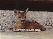 kitze_haus