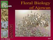 Flower structure of  ajwain
