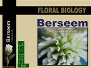 Flower structure of berseem