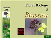 Flower structure of brassica