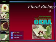 Flower structure of okra