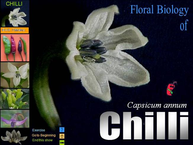 Pepper flowers anatomy flowers healthy flower structure of chilli authorstream ccuart Image collections