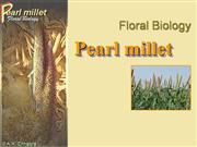 Flower Structure of pearl millet