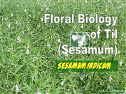 Flower Structure of sesamum