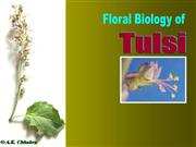 Flower Structure of tulsi
