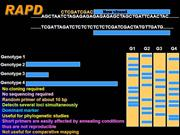 DNA Markers-RAPD