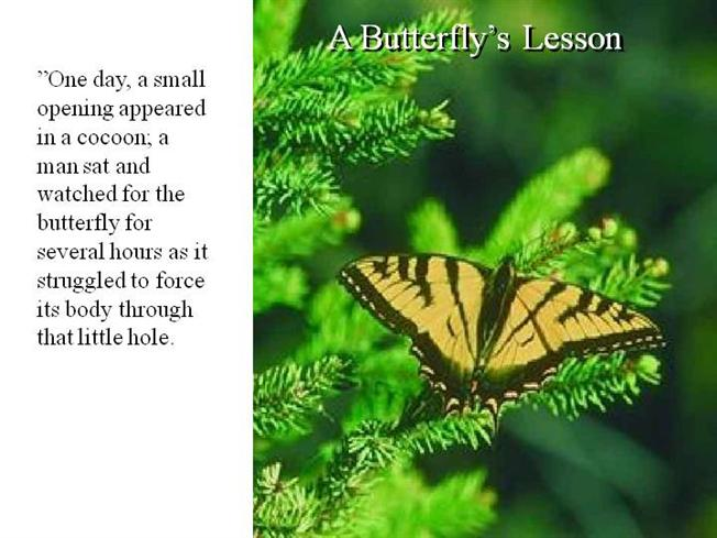 Butterfly-Motivation-Ppt |authorSTREAM