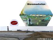 Bioremediation ppt