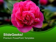 PINK BLOOMING FLOWER NATURE POWERPOINT TEMPLATE