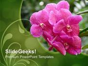 PINK FLOWER WITH GREEN BACKGROUND POWERPOINT TEMPLATE