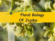 Floral biology of Jojoba