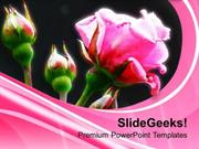 PINK ROSES FLOWER BEAUTY POWERPOINT TEMPLATE