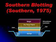 SOUTHERN BLOTTING AND CLUSTER ANALYSIS