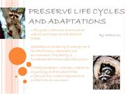 life cycle and adaptations