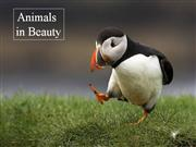 Animals in Beauty - part5