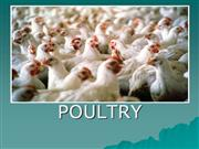 Poultry PowerPoint
