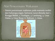 sistem pencernaan pada manusia