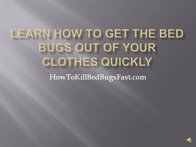 Learn How To Get The Bed Bugs Out Of Your Clothes Quick Authorstream
