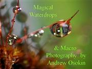 Magical Waterdrops & Macro Photography