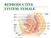 9-reproductive-system-female-1215491143977740-9