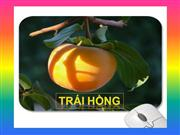TRÁI HỒNG-Persimmon