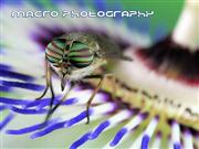 Macro-Photography - part5