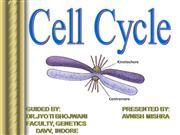 Avnish-Cell Cycle
