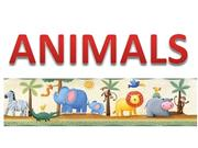 Animals A or An