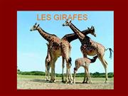 LES GIRAFES 1