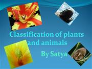 classification of plant