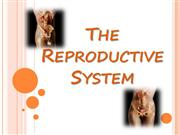 reproductive system - new