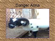 Anna-The Danger