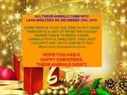 dumped on xmas day : laas shelters