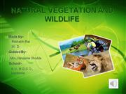 vegetation and wildlife