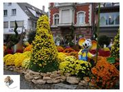 chrysanthemum festival in germany - from a chain-flier