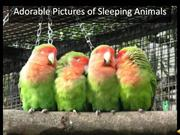 Adorable Pictures of Sleeping Animals