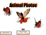Animals Pics