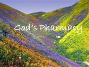 god's pharmacy's