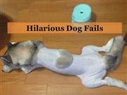 Hilarious Dog Fails
