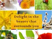 Delight in the beauty that surrounds you