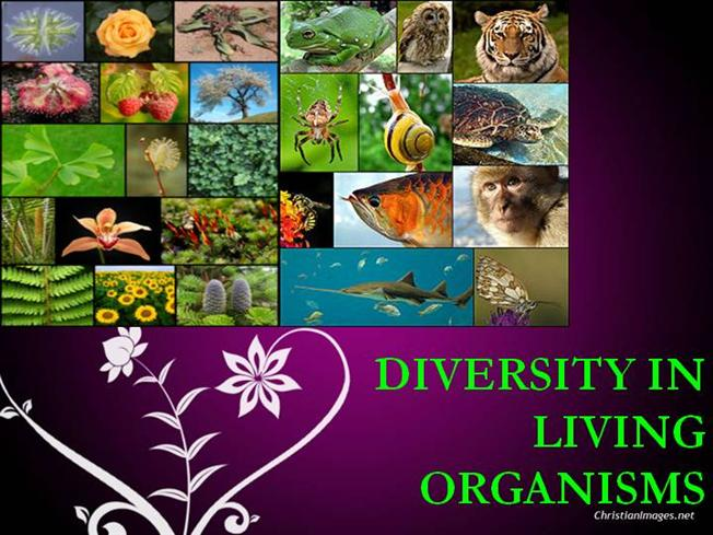 why are living organism so diverse Because it is known as the odds and ends drawer in other words, when scientists have just discovered an organism, that have to put it in a specific kingdom but if the organism does not belong in any particular kingdom, they put it in kingdom protista so, all of the organisms in protista don't exactly have a whole lot in common.