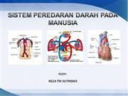 sistem peredaran darah manusia