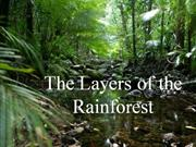 The_Layers_of_the_Rainforest_PP