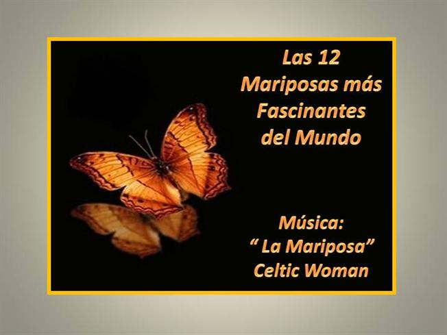Mariposas pdf bellas