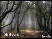 Selvas