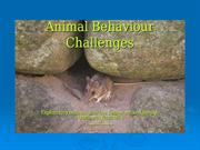 animal behaviour challenges - exploratory behaviour in mice