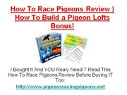 How To Race Pigeons Review
