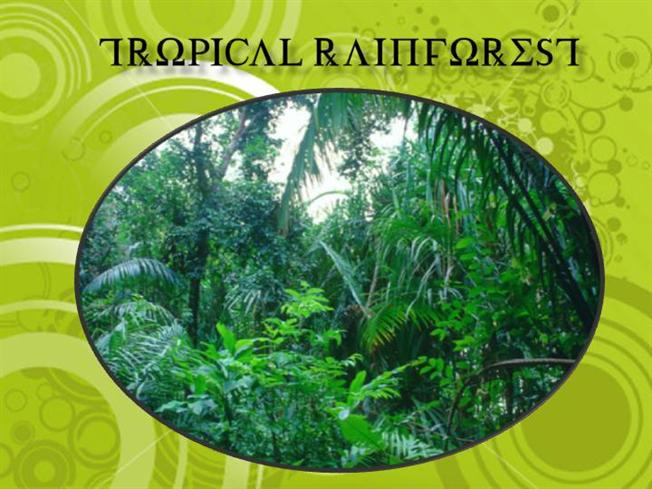 tropical rainforest authorstream